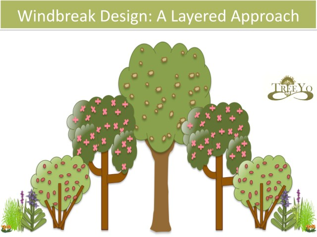 windbreak design