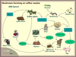 From ZERI and their coffee waste system, a cyclical example of economy