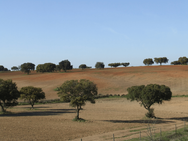 Plowed fields of Alentejo, Portugal. Soil death leading to desertification. http://www.pintasavoltadomundo.pt/o-alentejo-e-lindo-e-a-lonely-planet-sabe/