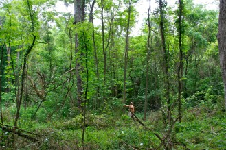 The tropicalness and humidity shows in this picture of the forest at Treasure lake Kentucky, non brittle climate