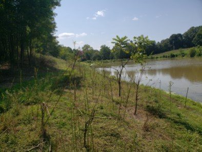 The look of a well eaten down previously overgrown zone for goats, moved due to feed becoming too low, Treasure Lake, KY