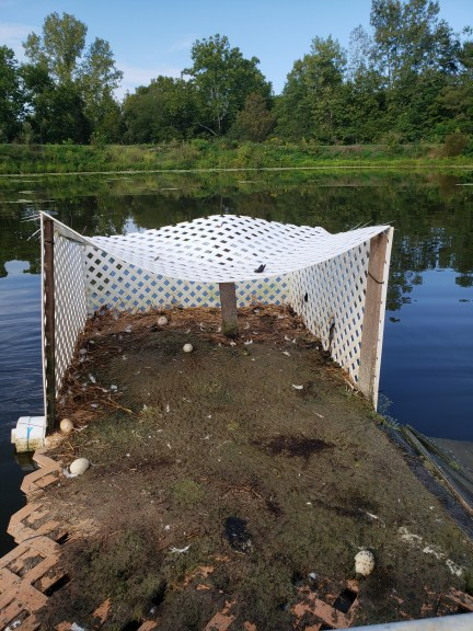 Dirty Duck island shelter,needs to be cleaned, didn't touch for awhile to retrain ducks to lay on the island because of predators, Treasure Lake, KY