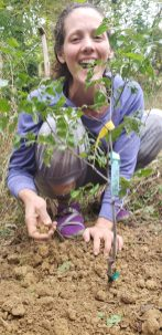 Allison planting in the fall her Jujube