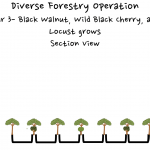 Permaculture Timber and Forestry animation 3