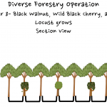 Permaculture Timber and Forestry animation 8