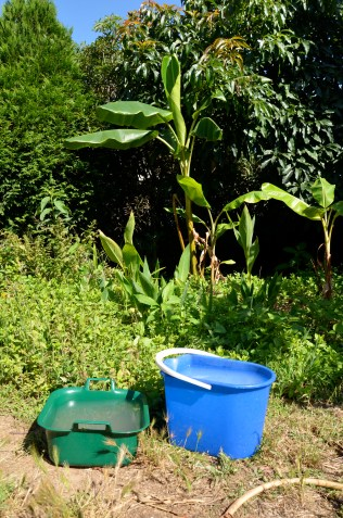 greywater buckets from kitchen sink in front of the banana circle