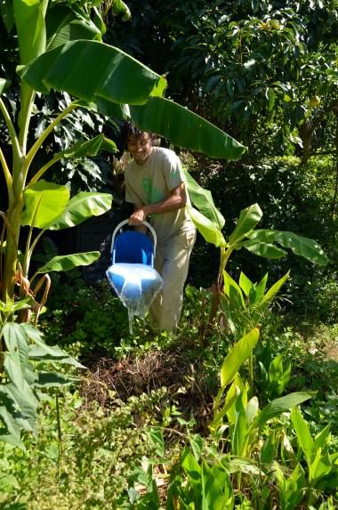 greywater buckets going into the banana circle