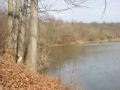 beaver marks on a lakeside oak tree at treasure lake