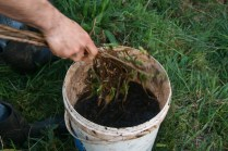 putting the compost extract out with branches