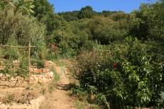 view of the Camino das Fadas where the sunken beds fit into the food forest. Some have gone from annuals to perennials