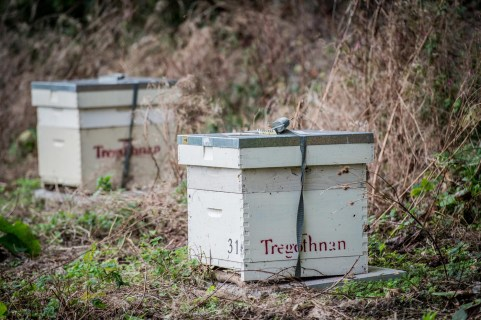 Bee hives at Tregothnan