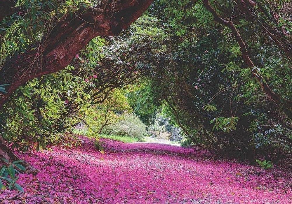 Private-Garden-Visit
