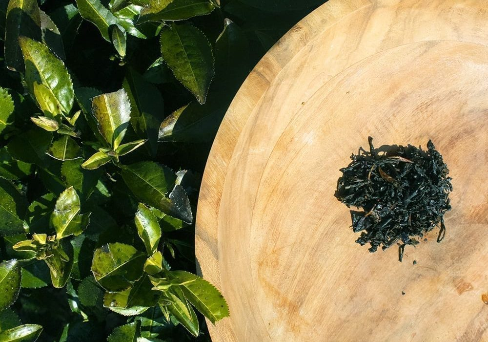 Single Estate Kea Plum tea on a bed of Camelia Sinensis
