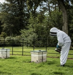 Tregothnan Bee Keeping