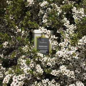 Product in flowering Manuka bush