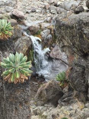 Icey Waterfall