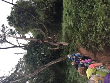 Lemosho Forest