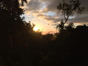 Sunset at Forest Camp