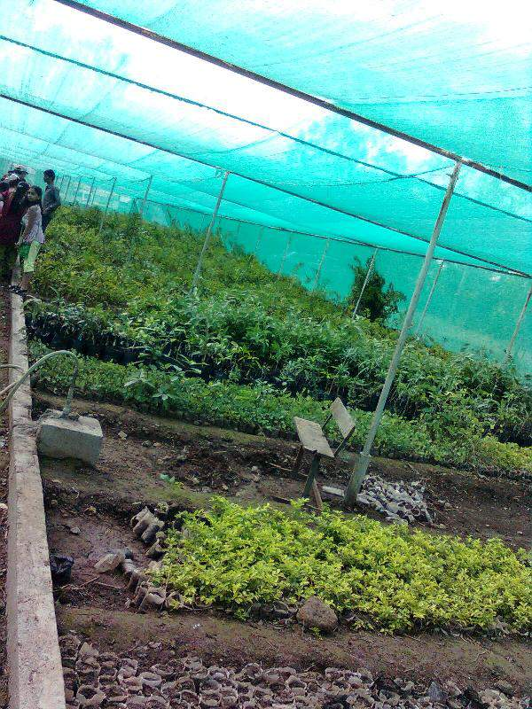 green house at morachin chincholi
