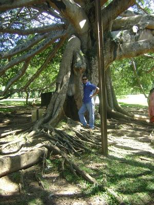 Botanical garden - Kandy
