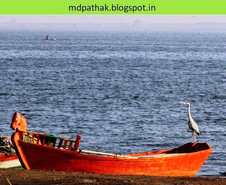 bhigwan bird watching backwaters of ujani dam