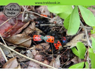 colorful insects on fort jarandeshwar
