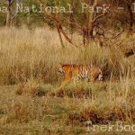 My Tadoba Jungle Safari Plan may help you