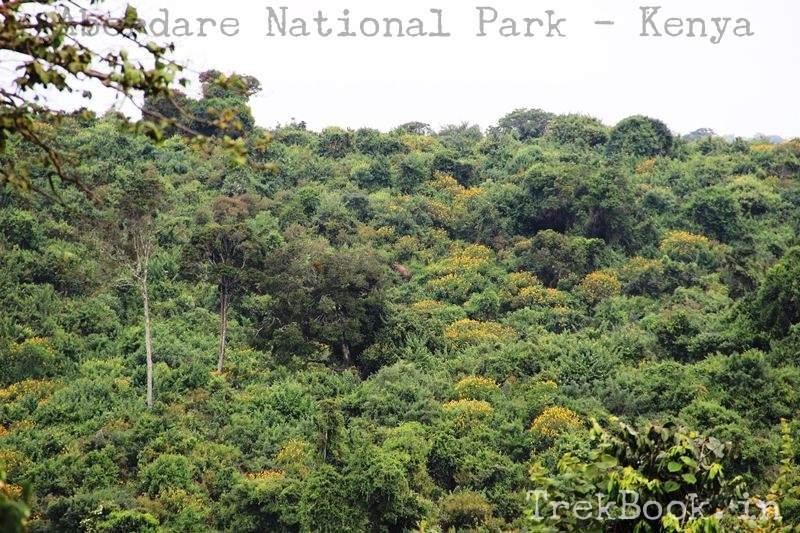 dense jungle Aberdare