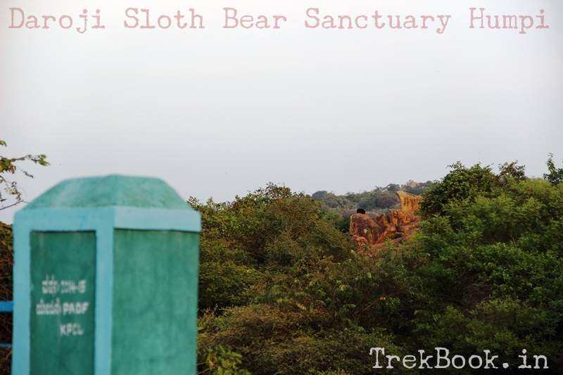 Spot bear from entry gate of Daroji Sloth Bear Sanctuary Humpi