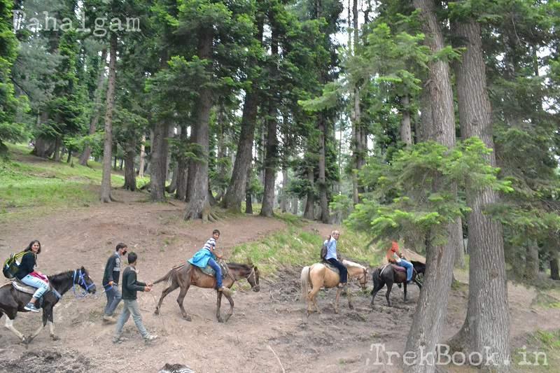 kashmir Pahalgam-horse-riding
