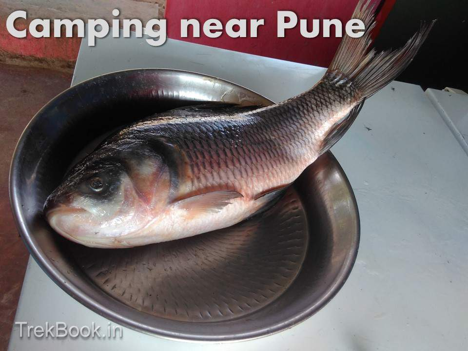 fresh fish eating camping pune barbecue