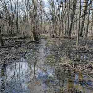 Flooded, muddy forest trail
