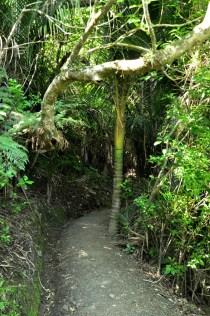 HIke Mt Manaia