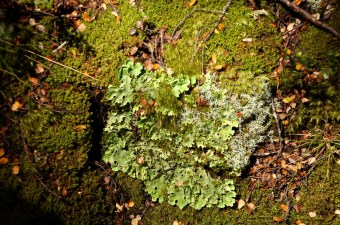 Lichen and moss