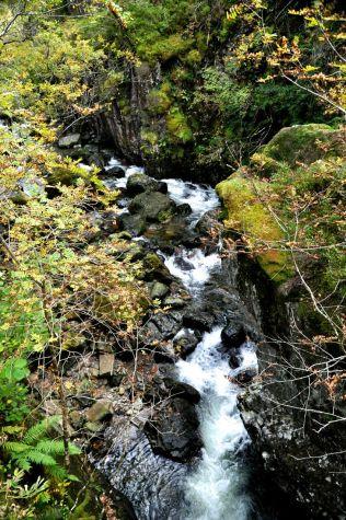 The pretty stream