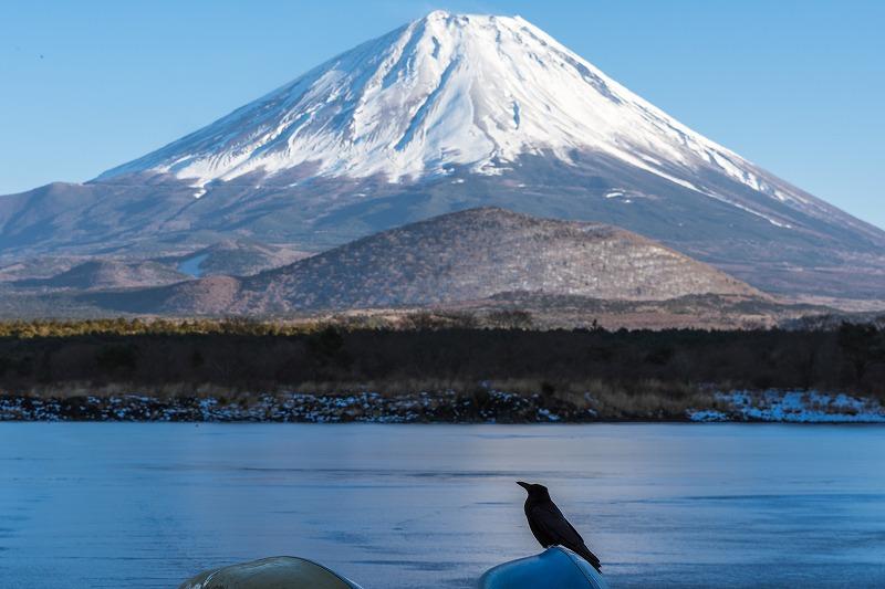 カラスと富士山
