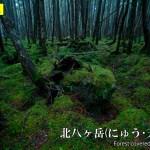 雨でも楽しめる。北八ヶ岳 苔の森を歩く