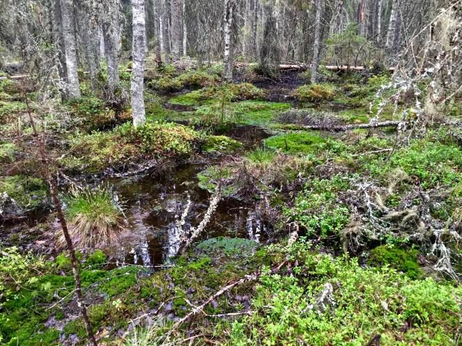 Liesjärvi, Katavalamminsuo