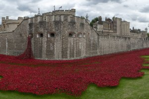 Tower of London poppy dispaly