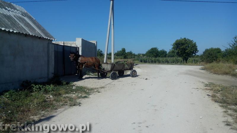 Mołdawia - Dzień 6 wóz z koniem trekkingowo