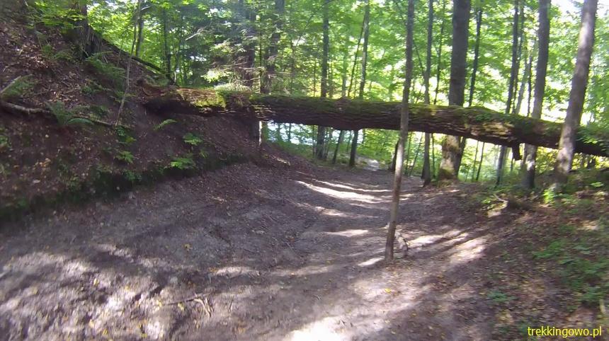 drzewo przeszkoda