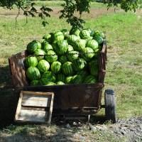 Jedzenie oraz ceny w Gruzji i Armenii