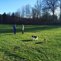 Walk with the dogs