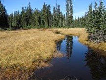 Meadow with stream.