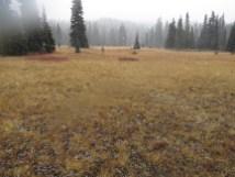 Big Meadow in Indian Heaven.