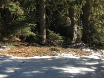 This area should have tree wells five feet deep this time of year not bare ground. I should be snowshoeing not hiking.