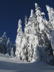 Heavily snow covered trees on the way to Ghost Ridge.