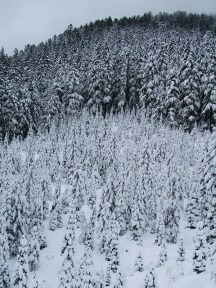 Snow covered trees at the bottom of Barlow Butte.