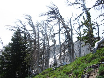 Ghost Trees on the ridge.