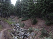 The trail climbs through old growth hemlock to the high point on Gnarl Ridge.